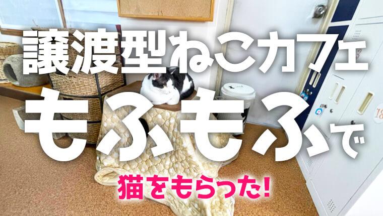 松本のねこカフェもふもふへ猫ちゃん体験!里親目的も。